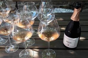 Posjet vinaru Jakončiču u Goriškim brdima: Užitak za sva čula