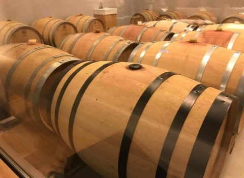 Vodnjan, oaza dobrih maslinovih ulja i još boljih vina 10