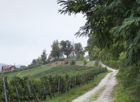 Vinska vizita v Zagorju 4