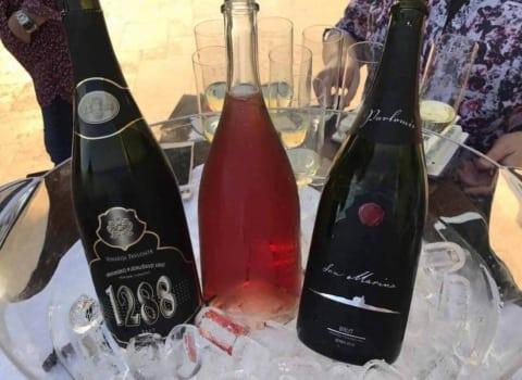 Primorsko – istarske WOW-ice posjetile vinariju Pavlomir 5