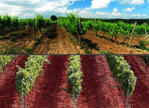 Burgundijski stil, istarski terroir 7